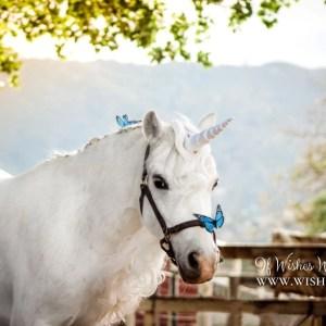 Unicorn Horn for Horse
