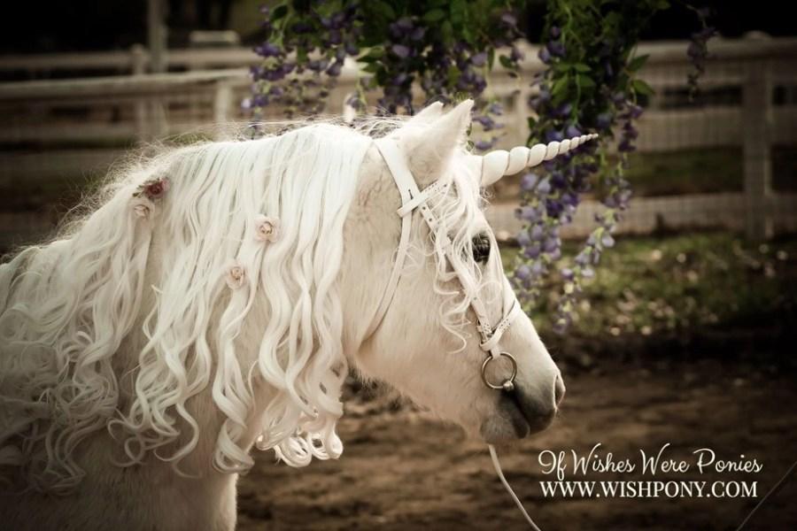 WishPony Vintage Unicorn