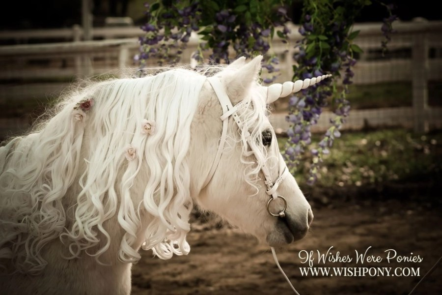 WishPony Ivory and Gold Unicorn Horn for Horses or Ponies