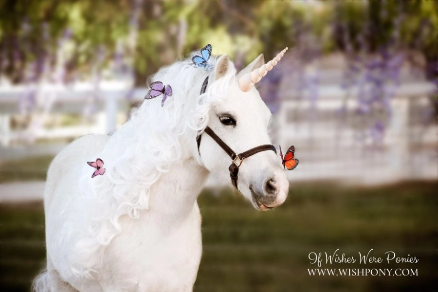Unicorn with Butterflies