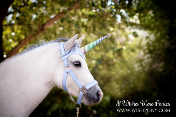Rainbow Unicorn Browband for Horse Pony