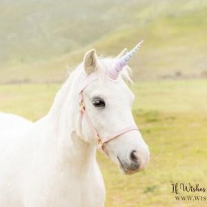 Wishpony.com Rainbow Unicorn Horn for horses and Ponies