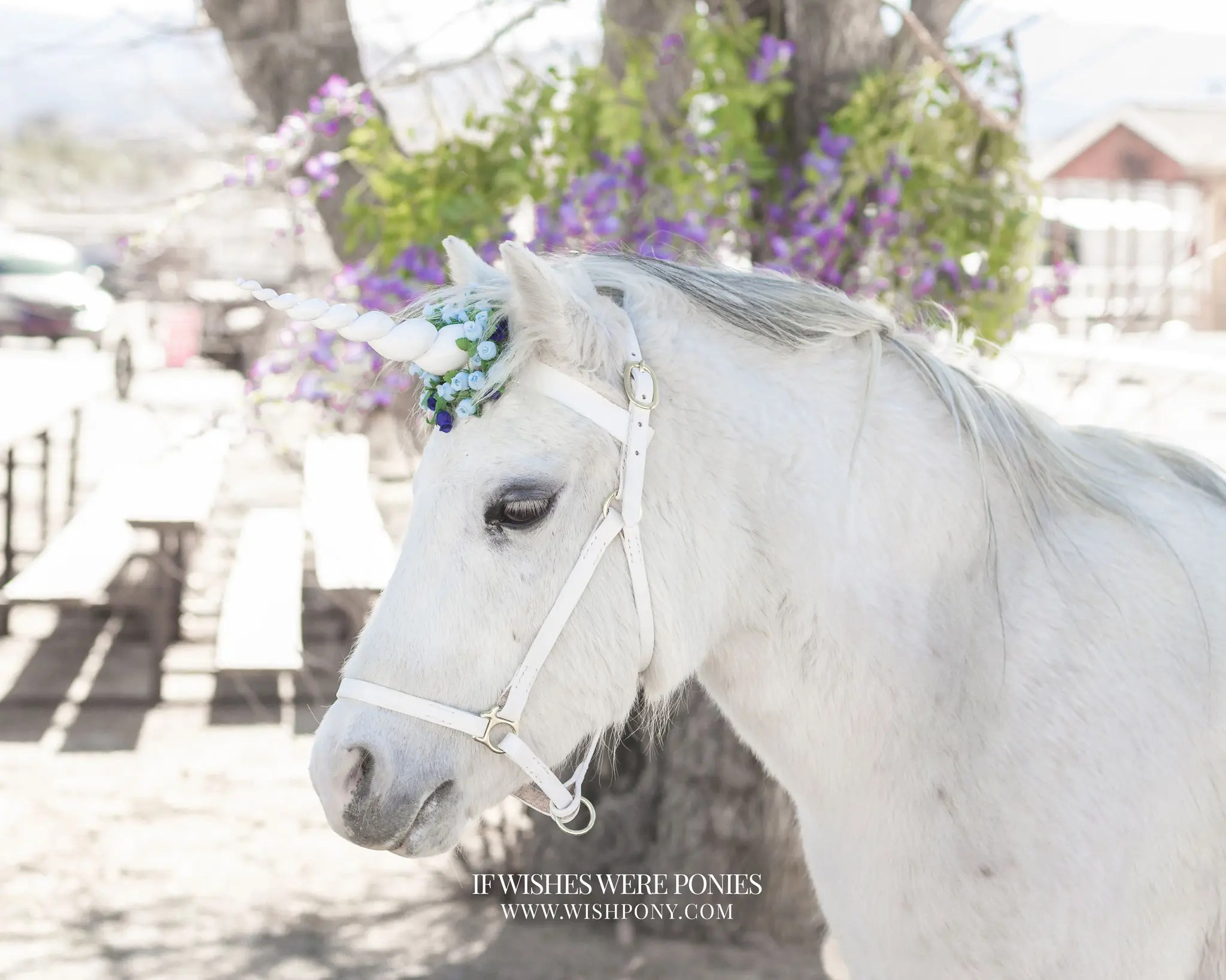 Economy Floral Unicorn Browbands from WishPony