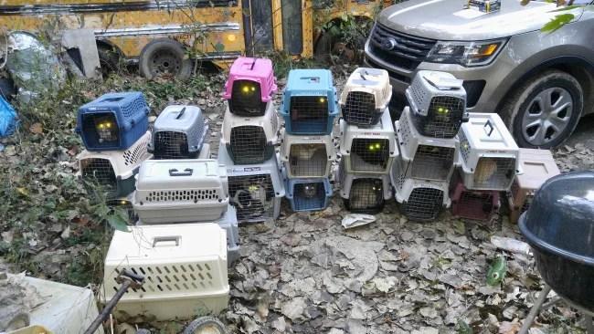 animal-hoarding_509331