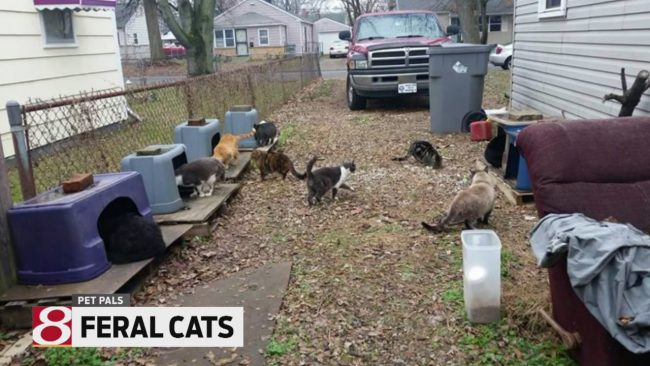 feral-cats_548781
