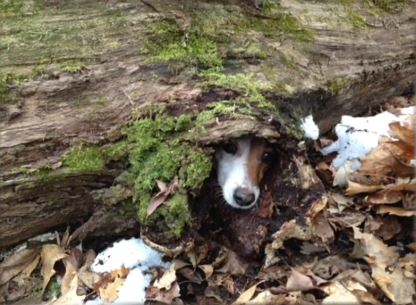 lost puppy 2_852345