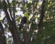 Tree climbing_1531473583928.JPG.jpg