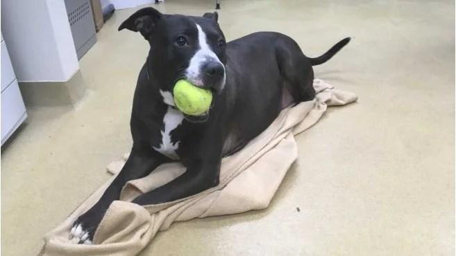 Dog spends 456 days in animal shelter in Hendricks County, Indiana