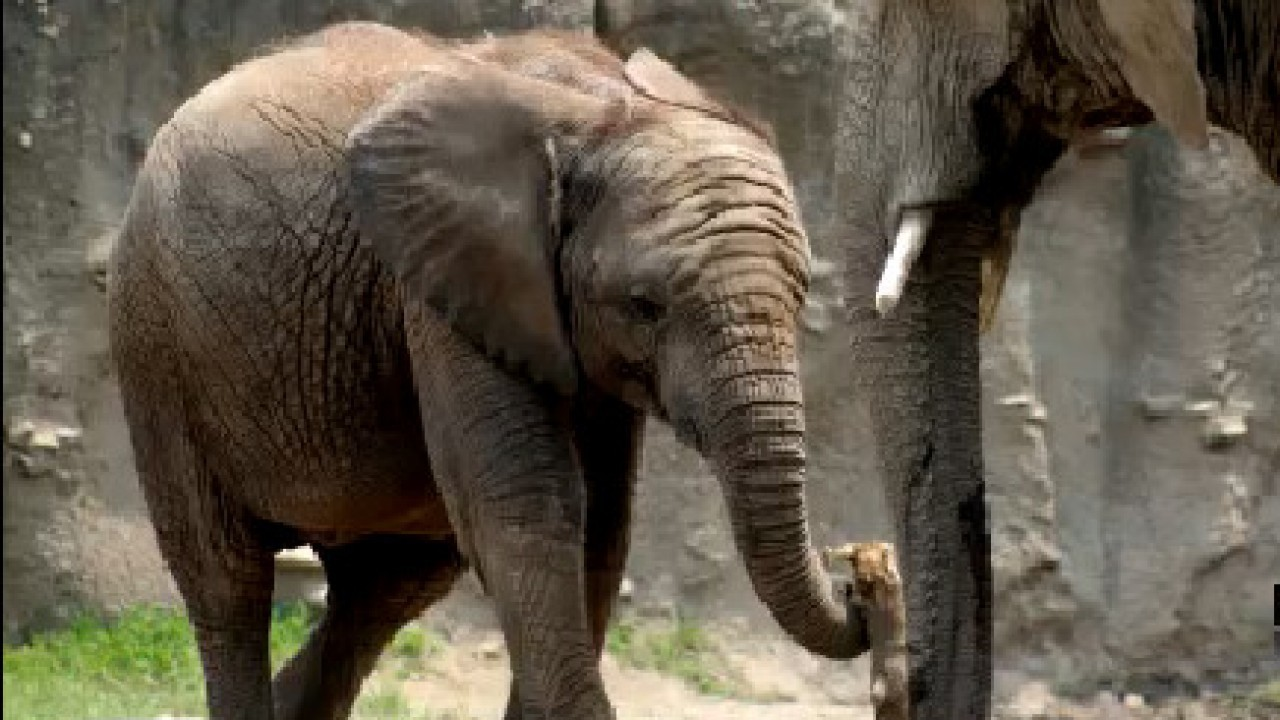 Second elephant dies at Indianapolis Zoo