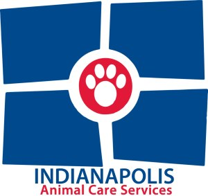 Take home a pet with IACS 'Pup-kin Patch Adoption' events