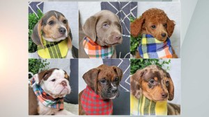 Seen these 6 puppies taken from Fishers pet store?