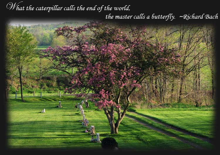 funeral/memorial butterfly release