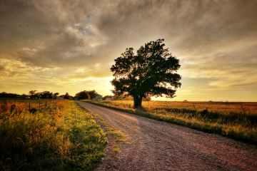 light road dawn landscape