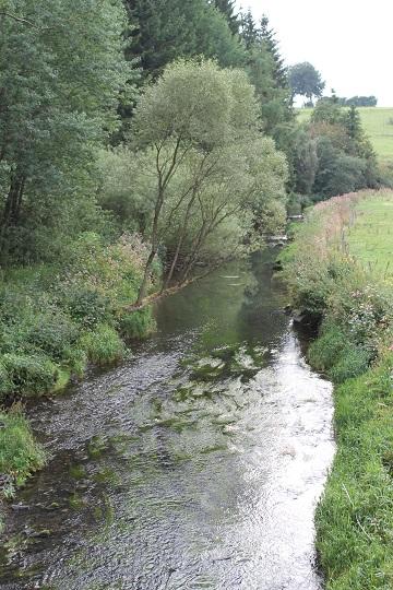 Ardennen19