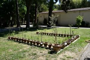 Giardino dei Semplici - Firenze