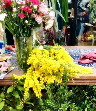 Mimosa blosson on the International Women's Day in Italy: La Festa della Donna