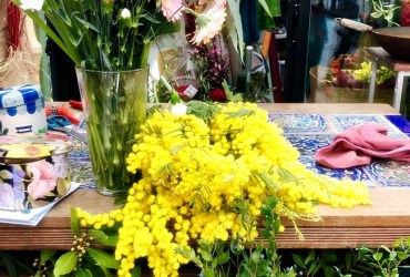 Mimosa blosson on the International Women's Day in Italy: la Festa della Donna
