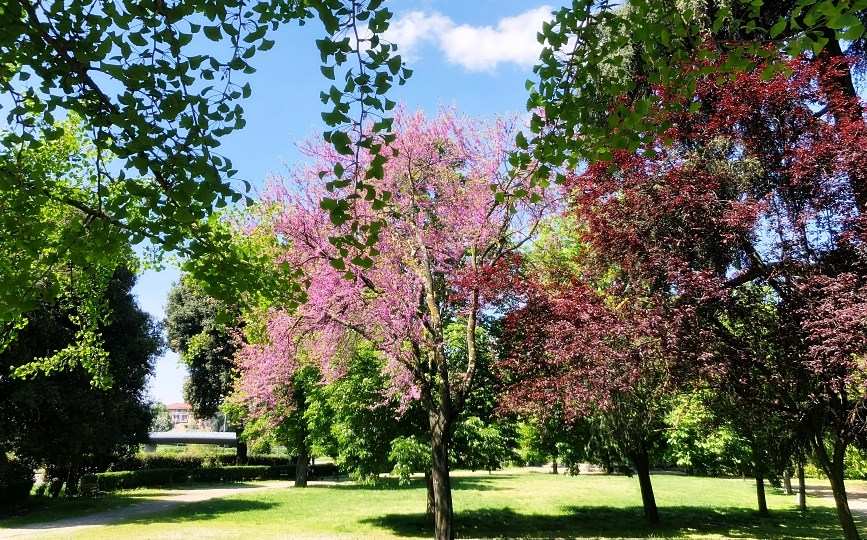 Gardens of Florence #13: parco delle Cascine, the largest public park in Florence