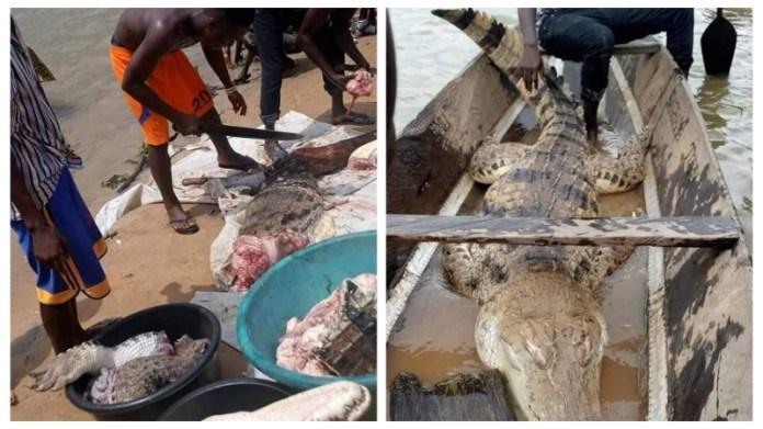 Image result for bayelsa butchered crocodile