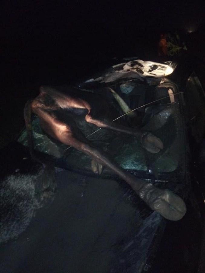 Newz] Cow crashes into car in Delta (photos)