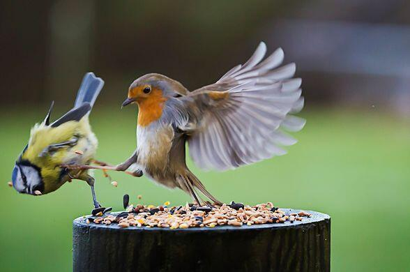 """THIS IS SPARTA!"""