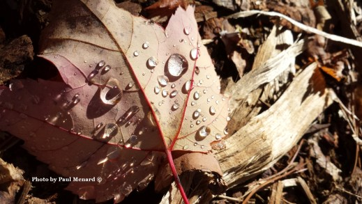 Leaf with water droplets_cprt