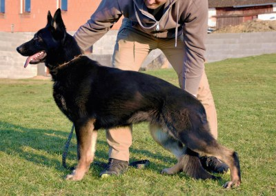 Xiba vom Haus Tyson