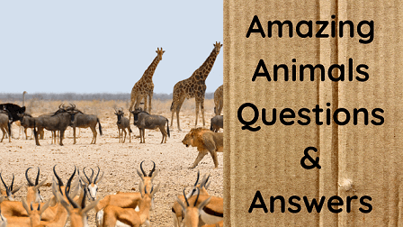 Amazing Animals Questions & Answers