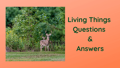Living Things Questions & Answers