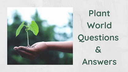 Plant World Questions & Answers