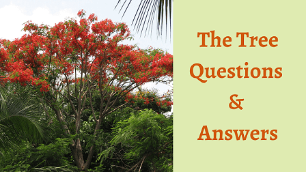 The Tree Poem Questions & Answers