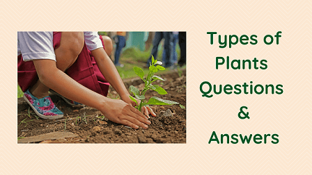 Types of Plants Questions & Answers