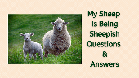My Sheep Is Being Sheepish Questions & Answers