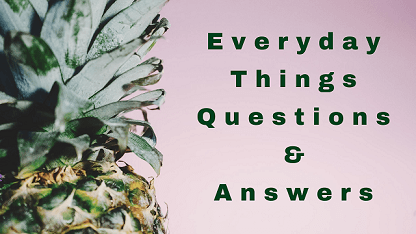 Everyday Things Questions & Answers