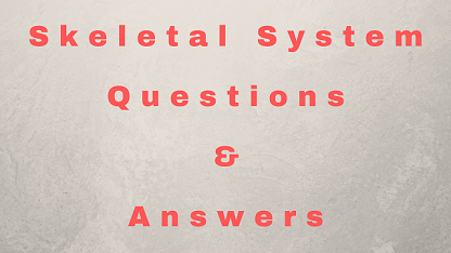 Skeletal System Questions & Answers