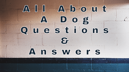 All About A Dog Questions & Answers