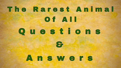The Rarest Animal Of All Questions & Answers