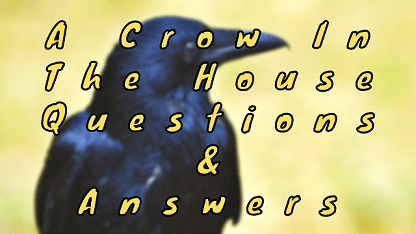 A Crow In The House Questions & Answers