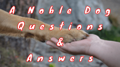 A Noble Dog Questions & Answers