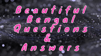 Beautiful Bengal Questions & Answers