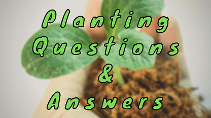Planting Questions & Answers