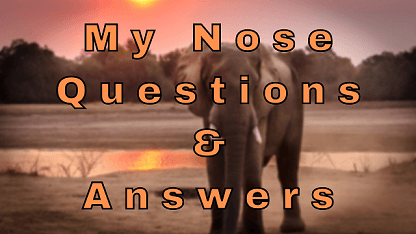 My Nose Questions & Answers