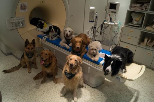 Dog Brains_304346