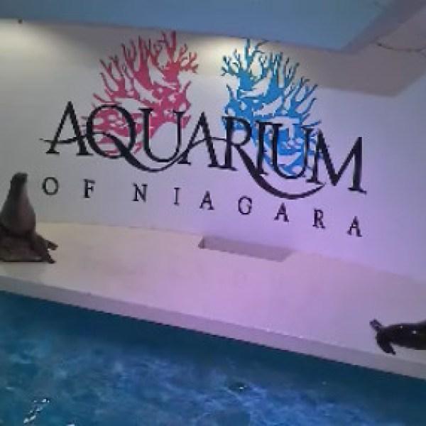 aquarium_539737