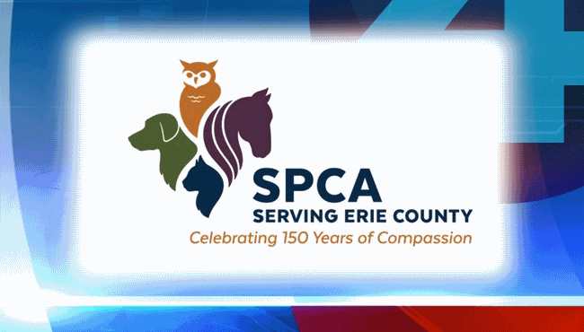 spca erie county_1527246019999.png.jpg