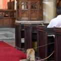 Pets' Service A