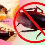 How to keep Cockroaches away from home? Home Remedies…