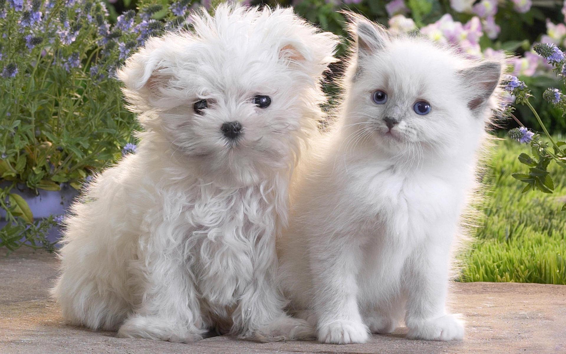 Pets3_53571