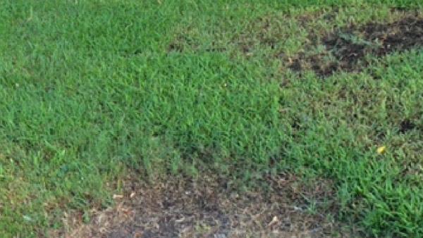 r-grass-yard-web_bkg_tex_la_189542