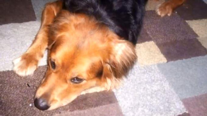 tortured dog_1552776715260.JPG.jpg